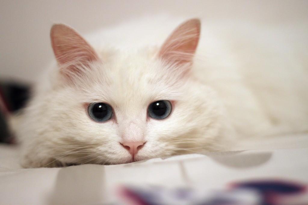 读书猫卡通图片