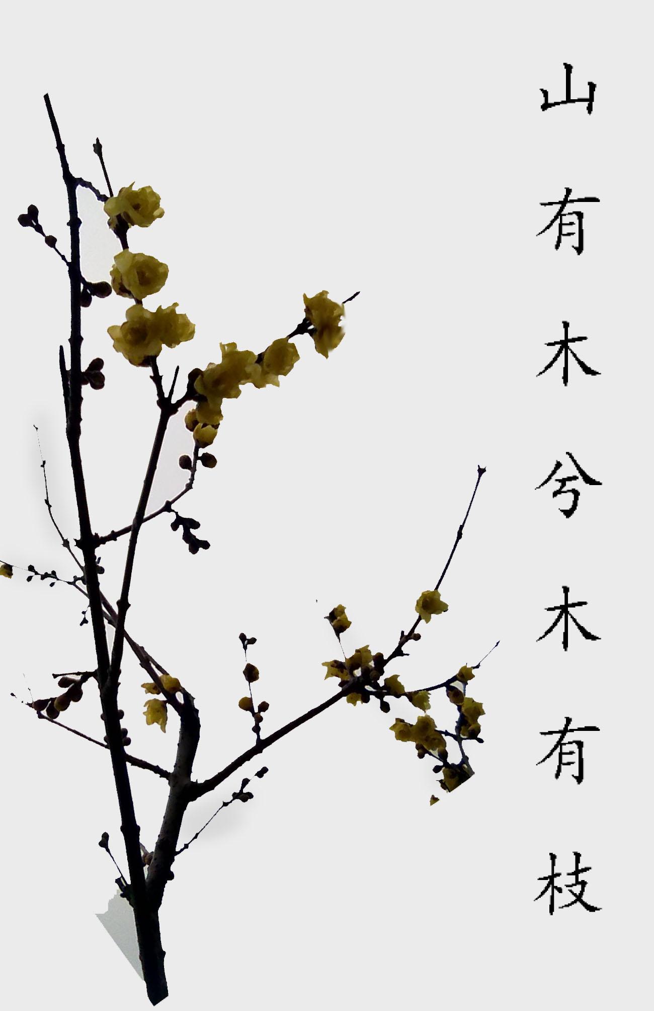 你读过最孤独的诗是哪一句:山有木兮木有枝,心悦君兮君不知